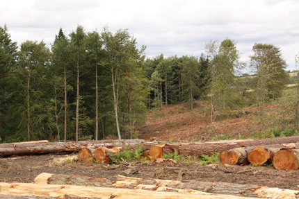 Forestry Scotland